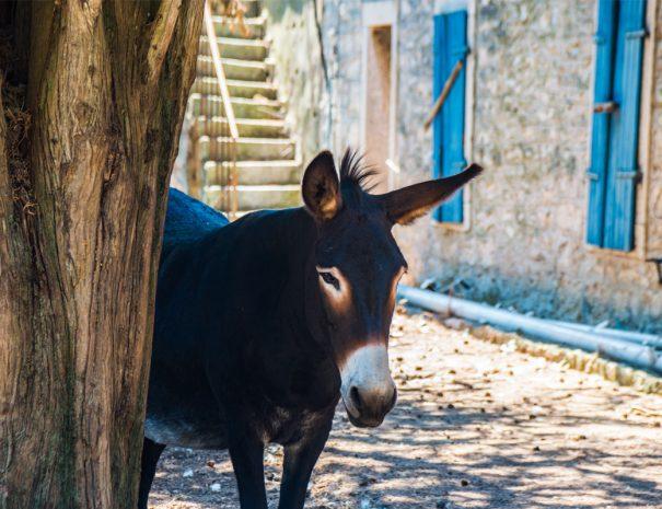 donkey croatia