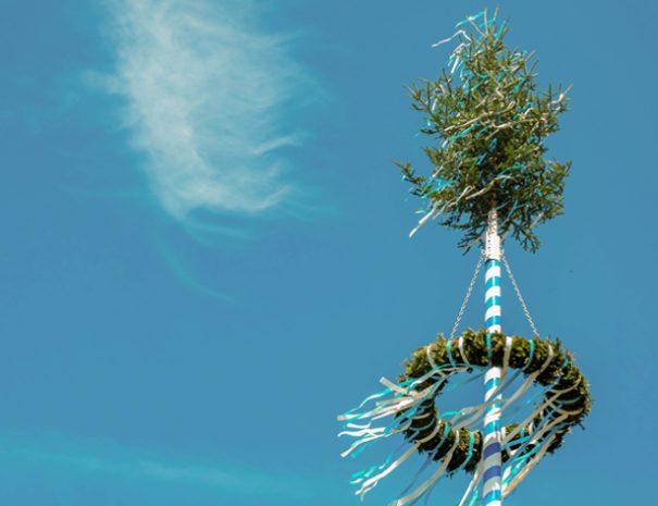may tree smanjena