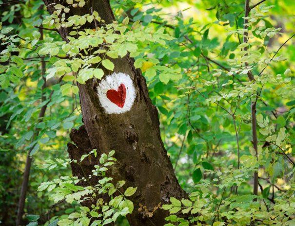 Fruska-Gora-hiking-sign-(3)-web